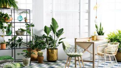 Photo of Các cách trang trí cây xanh trong nhà đơn giản