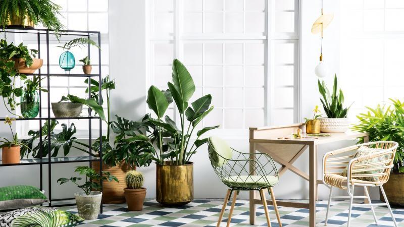 Cách trang trí, decor nhà bằng cây xanh