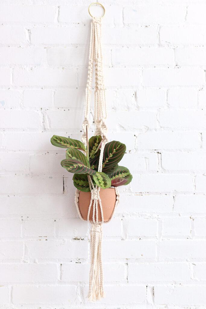 Trang trí bằng cách treo chậu cây trên mảng tường