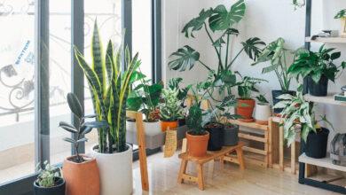 Photo of Những loại cây trồng dễ trồng, dễ tìm phù hợp cho căn nhà, căn hộ