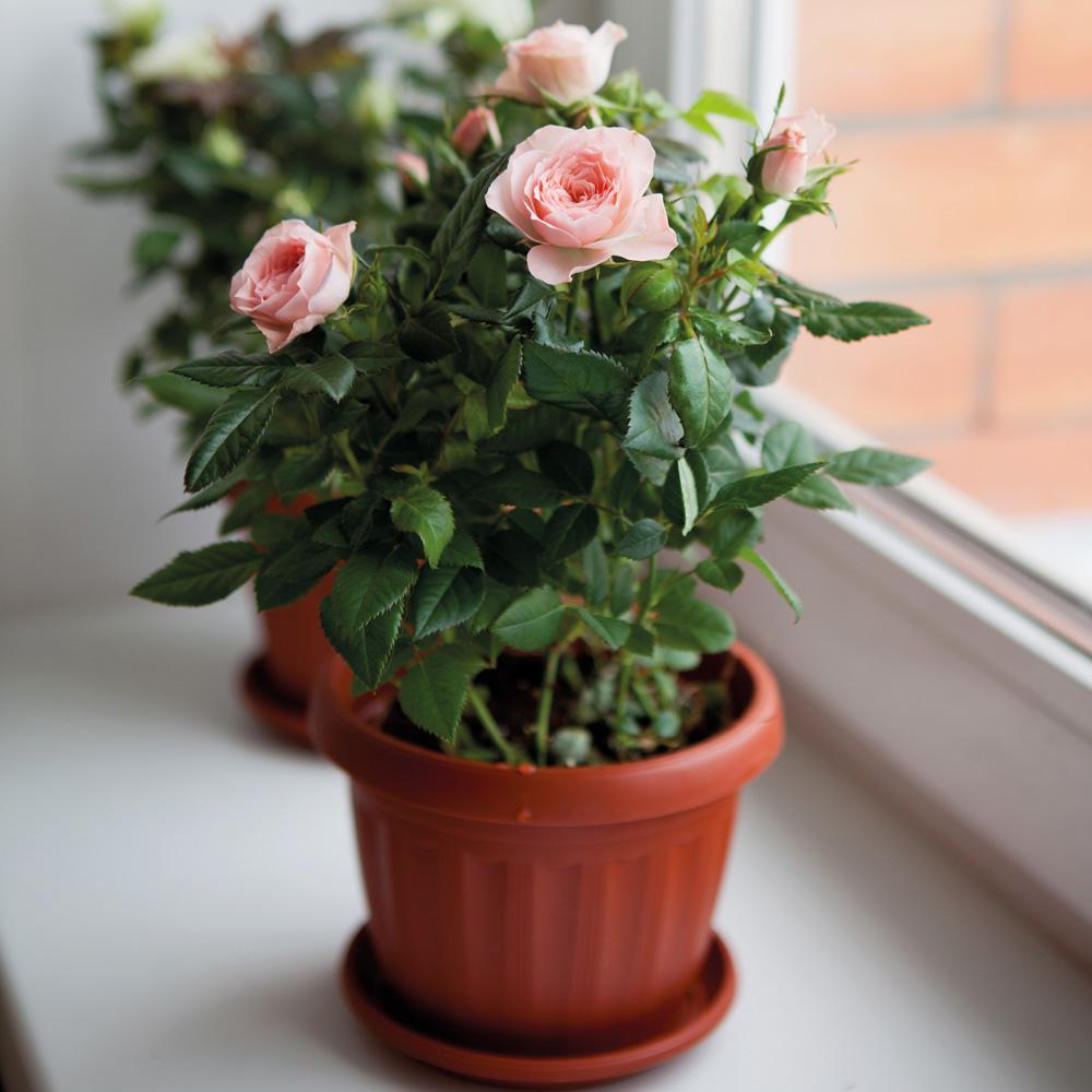 Hoa đẹp nhưng có gai, nếu thích hãy cân nhắc nhé.