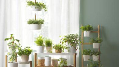Photo of Những điều cần lưu ý khi chọn cây trồng trong nhà